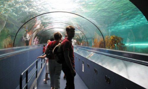 31/10  Sydney och akvariet
